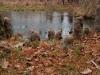 2008-11-29pic024(Maramec Spring)(resized)