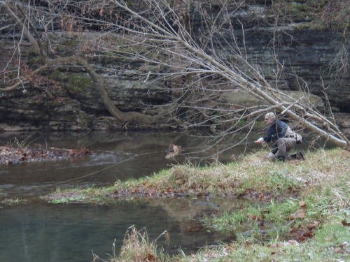 Brian Wise is seen here fishing a section of Crane Creek under the cover of a downed tree.
