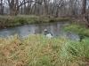 2008-11-30pic115(Crane Creek)(resized)