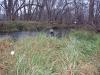2008-11-30pic118(Crane Creek)(resized)