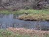 2008-11-30pic119(Crane Creek)(resized)