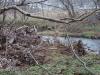 2008-11-30pic120(Crane Creek)(resized)