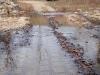 2008-11-28pic050(Barren Fork)(resized)