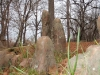 2008-11-29pic023(Maramec Spring)(resized)