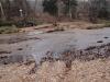 2008-11-30pic013(Roaring River)(resized)